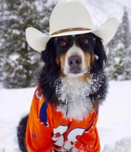 Toby and the Denver Broncos